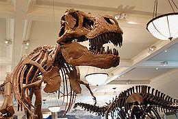 dinosaur-wikipedia