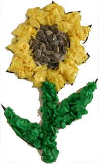 dtlk-ssunflower